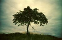 http://larsreinholdt.dk/files/gimgs/th-35_tree_web.jpg